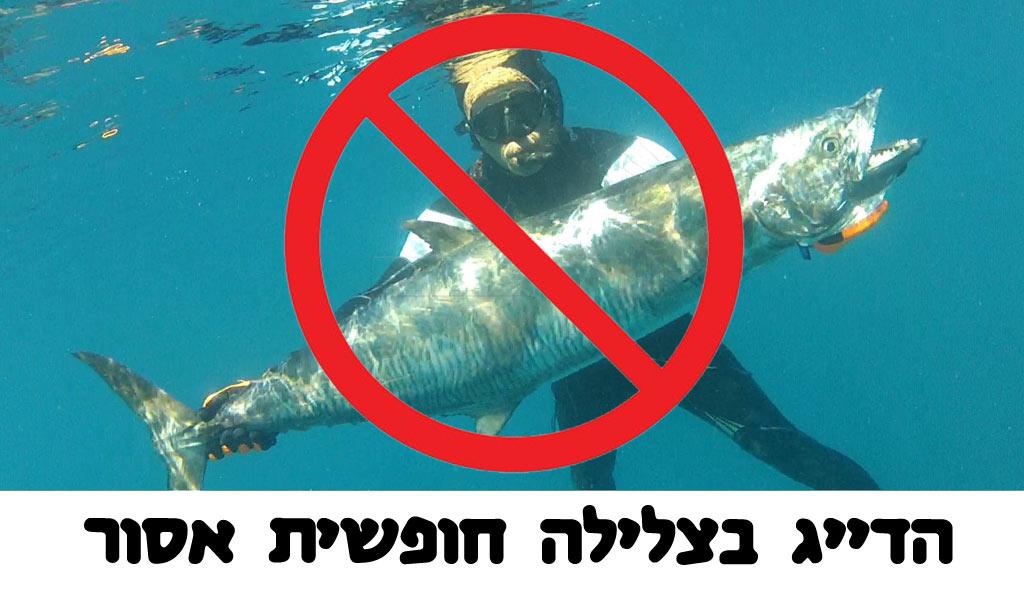 הדייג בצלילה חופשית אסור! - no spearfishing please